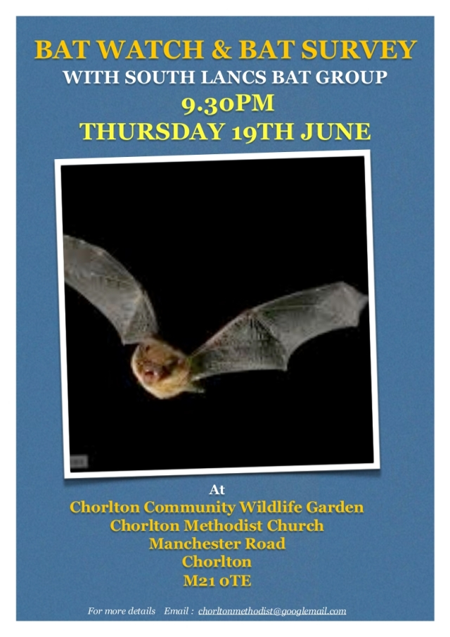 batnightandsurvey19june