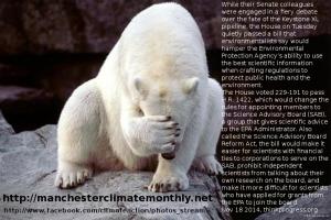 polarbearenvprotagency