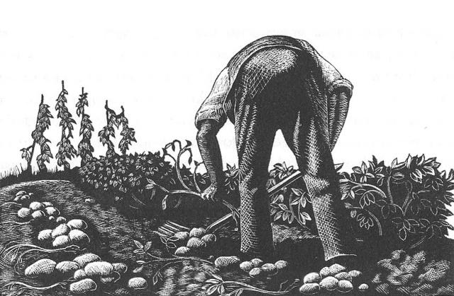 man-digging-potatoes-no-border