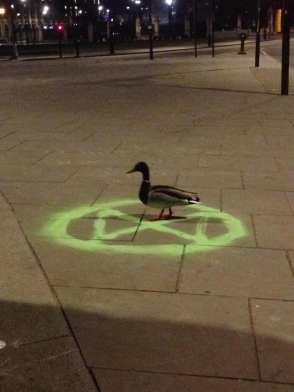 xr duck